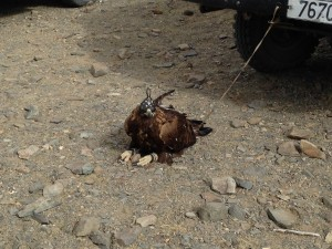 Yes, that eagle is tied to someone's front fender